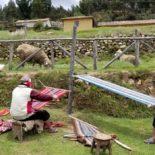 The Chahuayteri weaving community, Peru: 2018